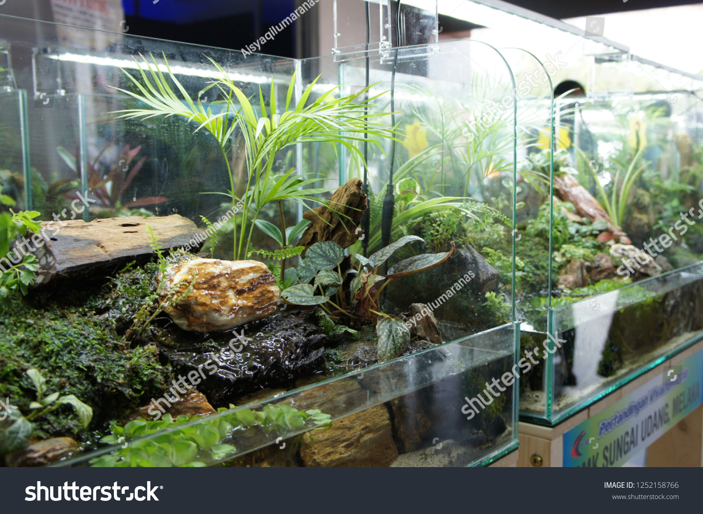Aquascape Design Small Glass Aquarium Displayed Stock Photo Edit Now 1252158766