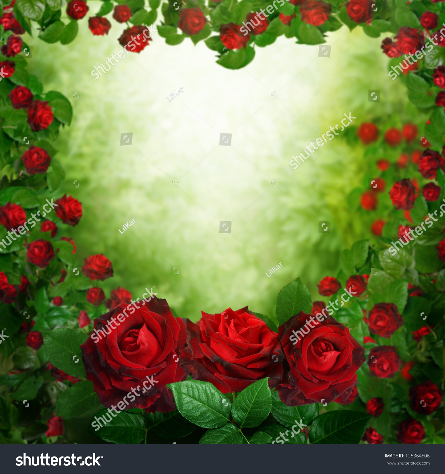 Beautiful Red Roses Background Stock Photo 125364506 ...