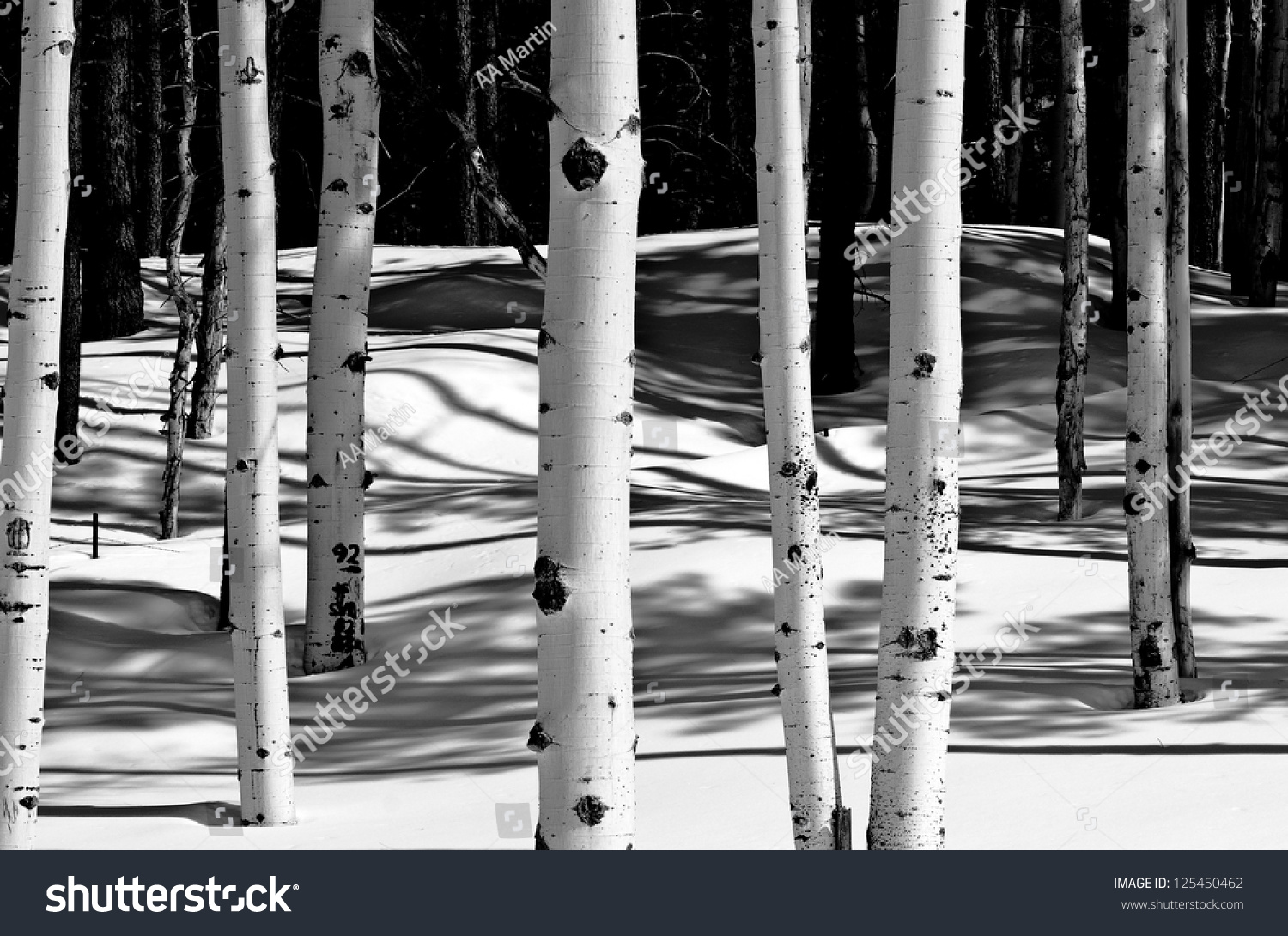 grove of aspen trees in winter snow stock photo 125450462. Black Bedroom Furniture Sets. Home Design Ideas