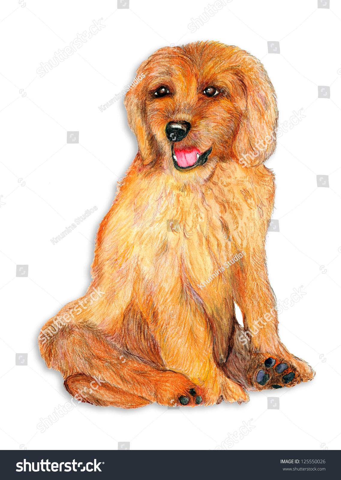 Original Artwork Pencil Watercolor Drawing Goldendoodle Stock Photo Edit Now 125550026