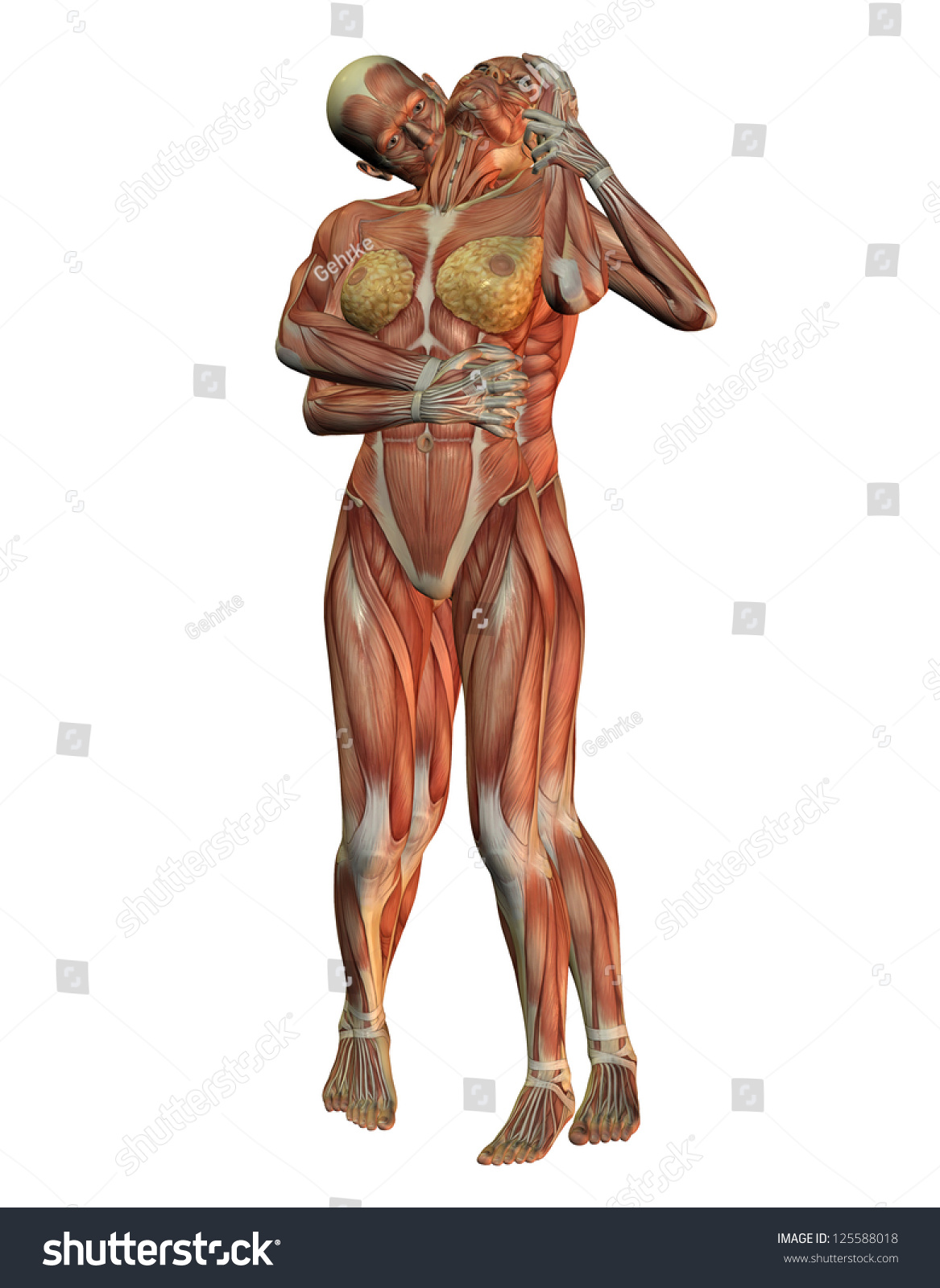 3 D Rendering Anatomy Muscular Structure Human Stock Illustration