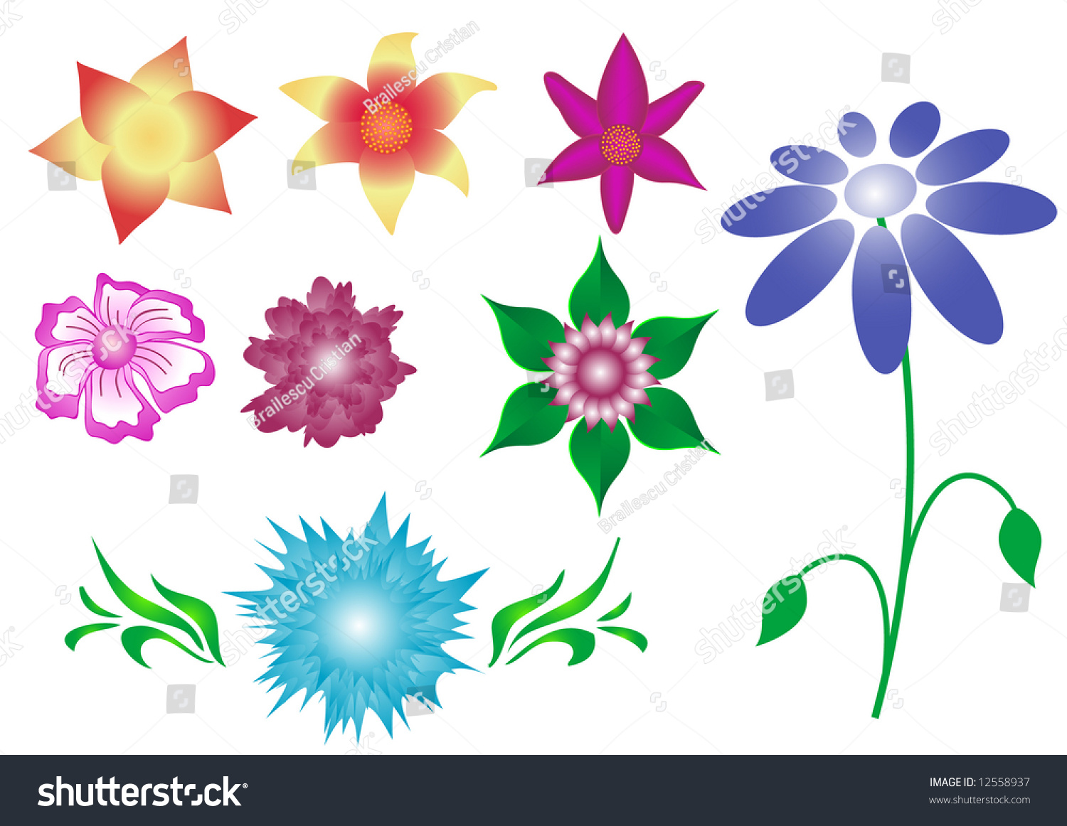 Eight Types Flowers Isolated On White Stock Illustration 12558937