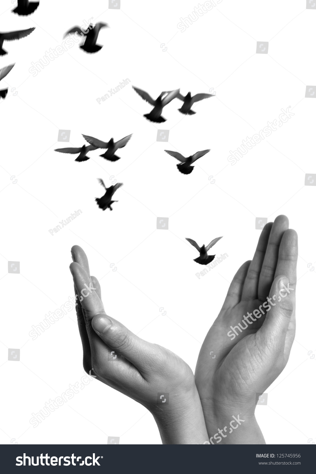Flying Dove Open Hand Isolated On Stock Photo 125745956 ...