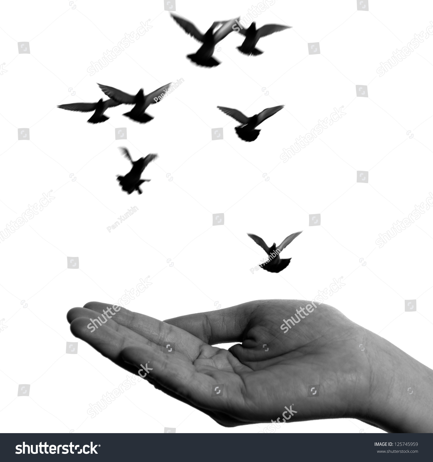 Flying Dove Open Hand Isolated On Stock Photo 125745959 ...