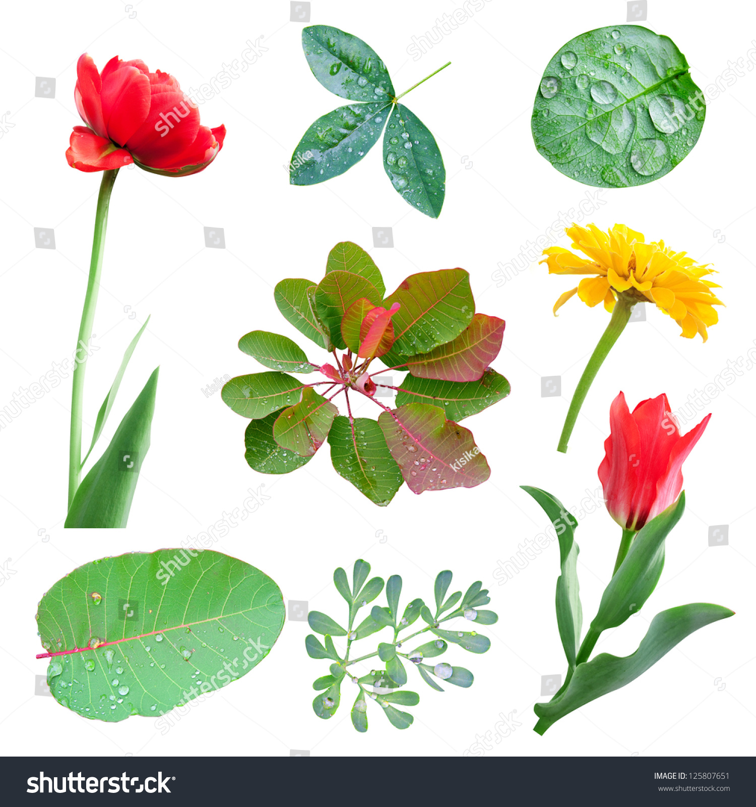 Spring Green Leaves And Flowers Background With Plants: Spring Set Of Leaves And Flowers