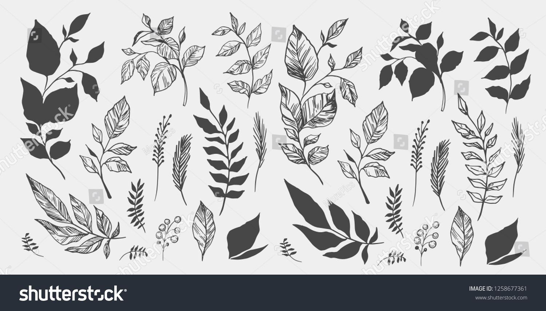 Set of leaves. Hand drawn decorative elements. Vector illustration #1258677361