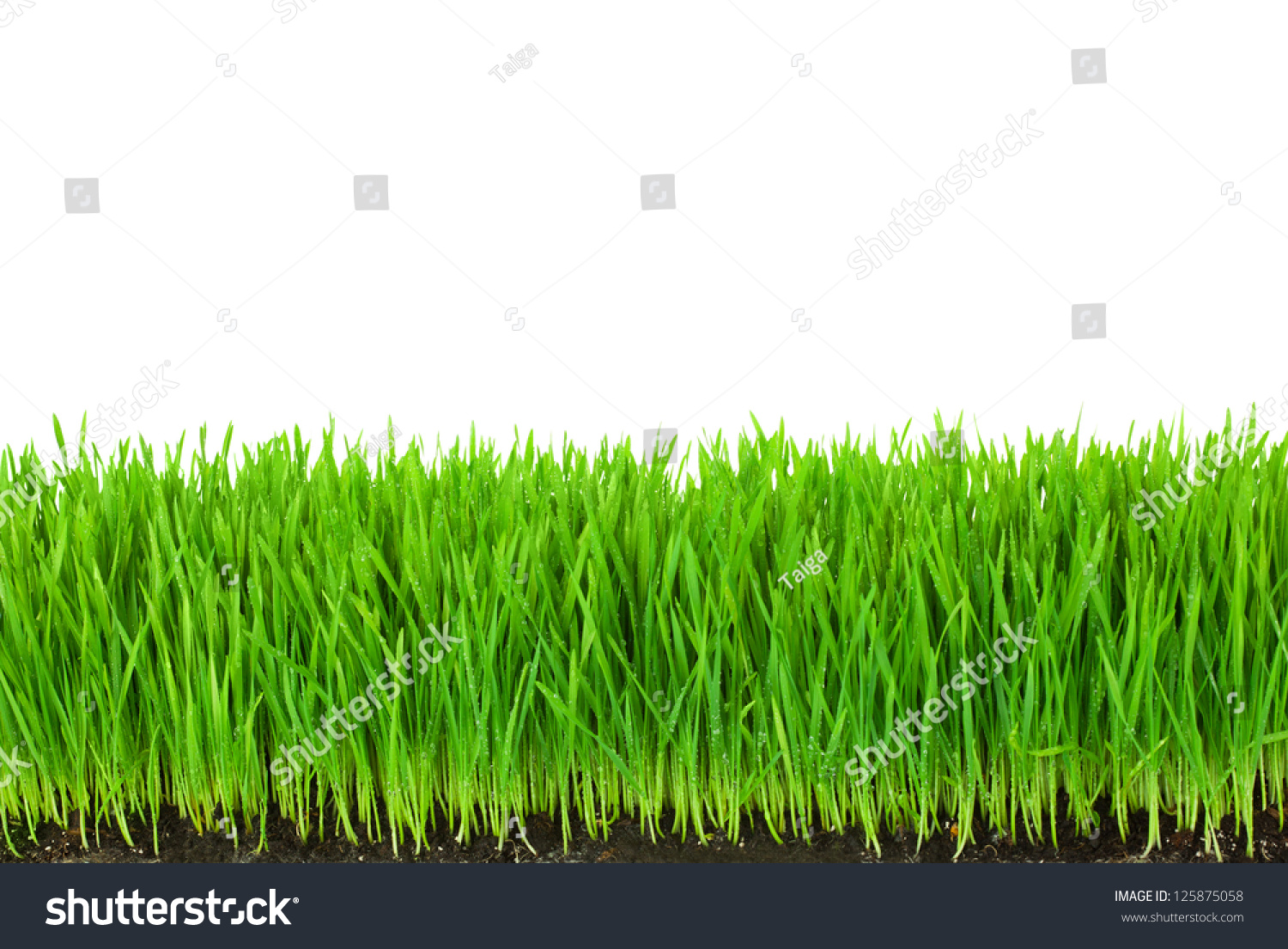 Green grass with fertile soil and drops dew isolated on for Soil and green
