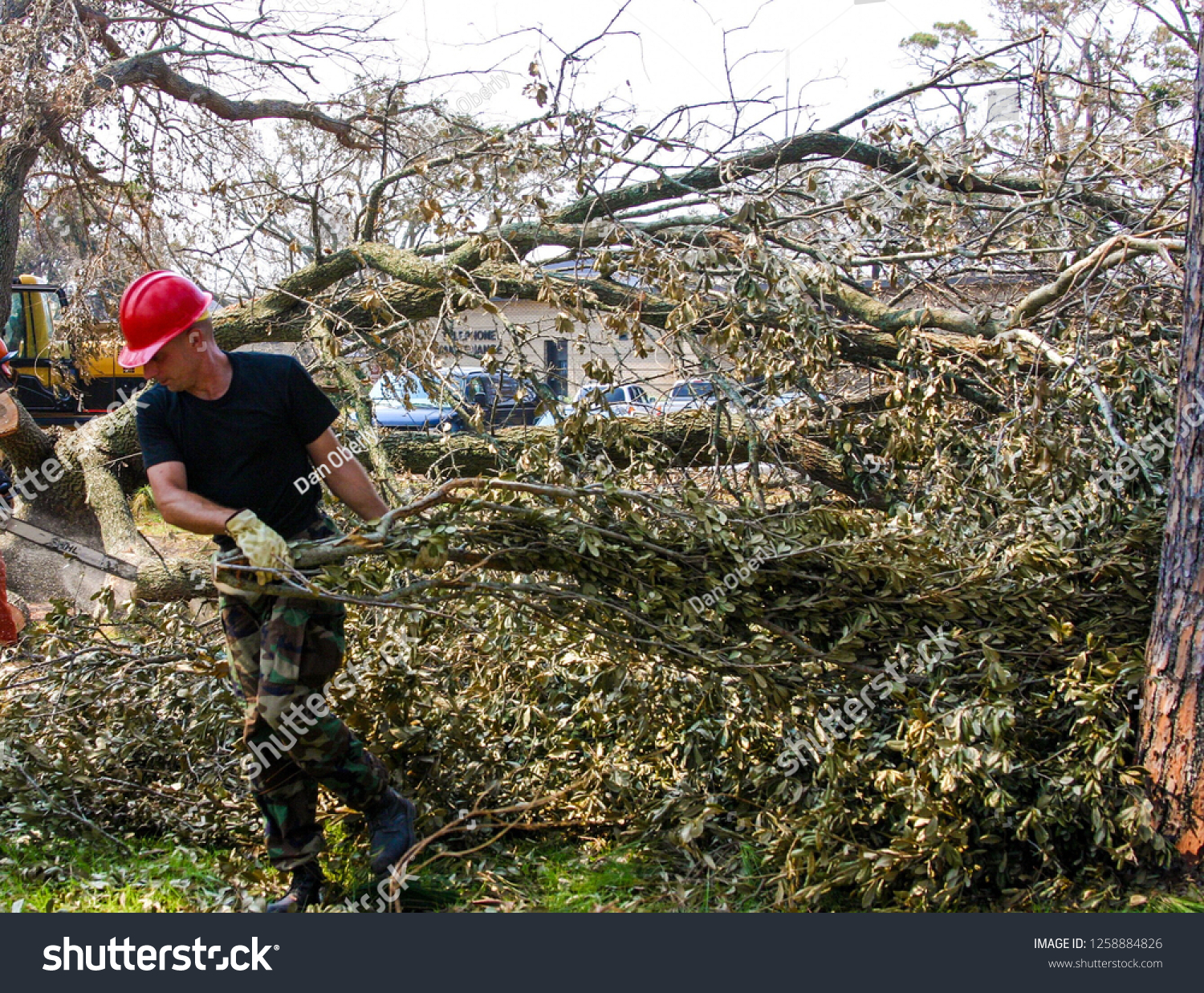 Civil Engineer Pulls Branches Felled By Stock Photo (Edit