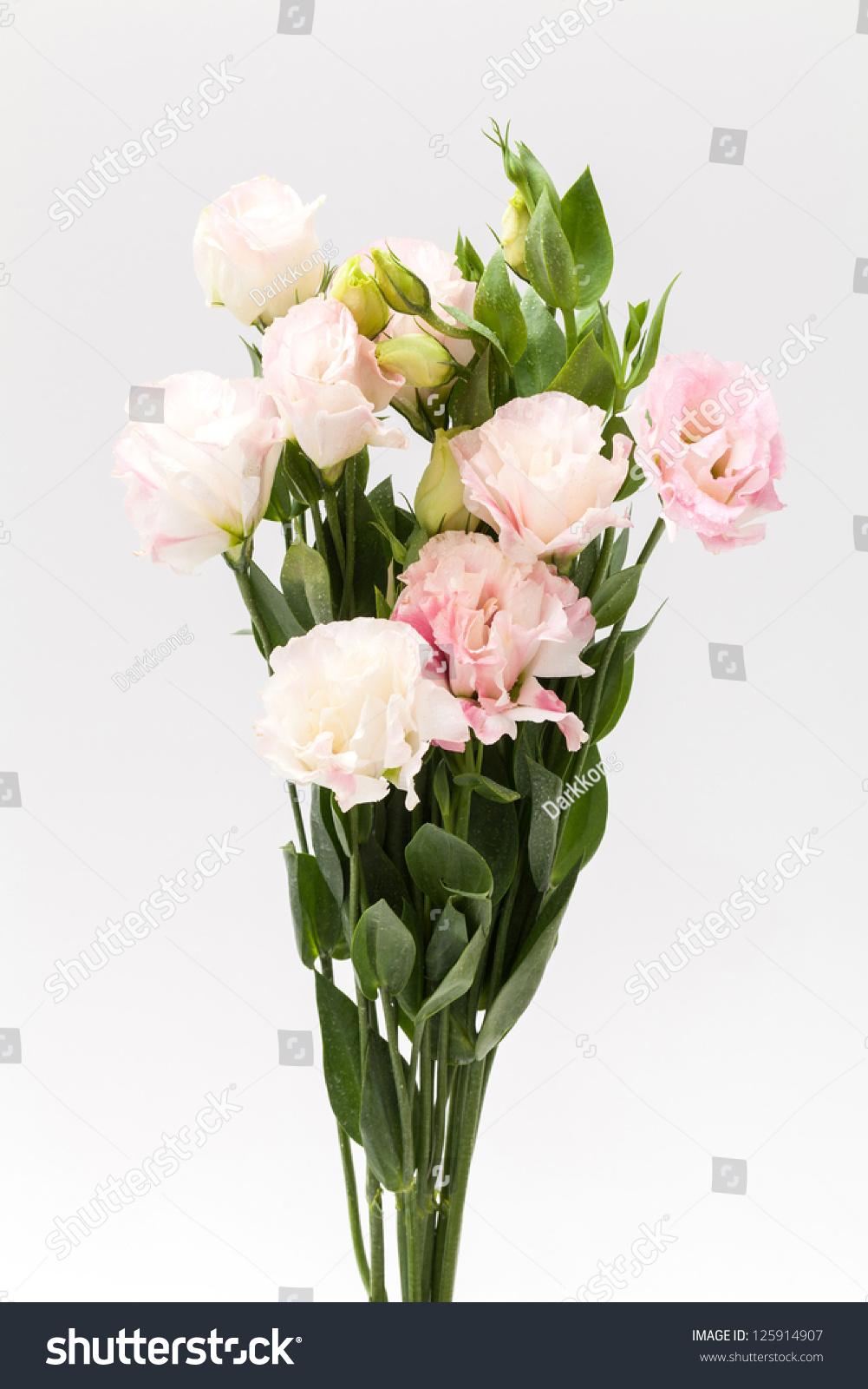 Lisianthus Flower On White Background Stock Photo Edit Now