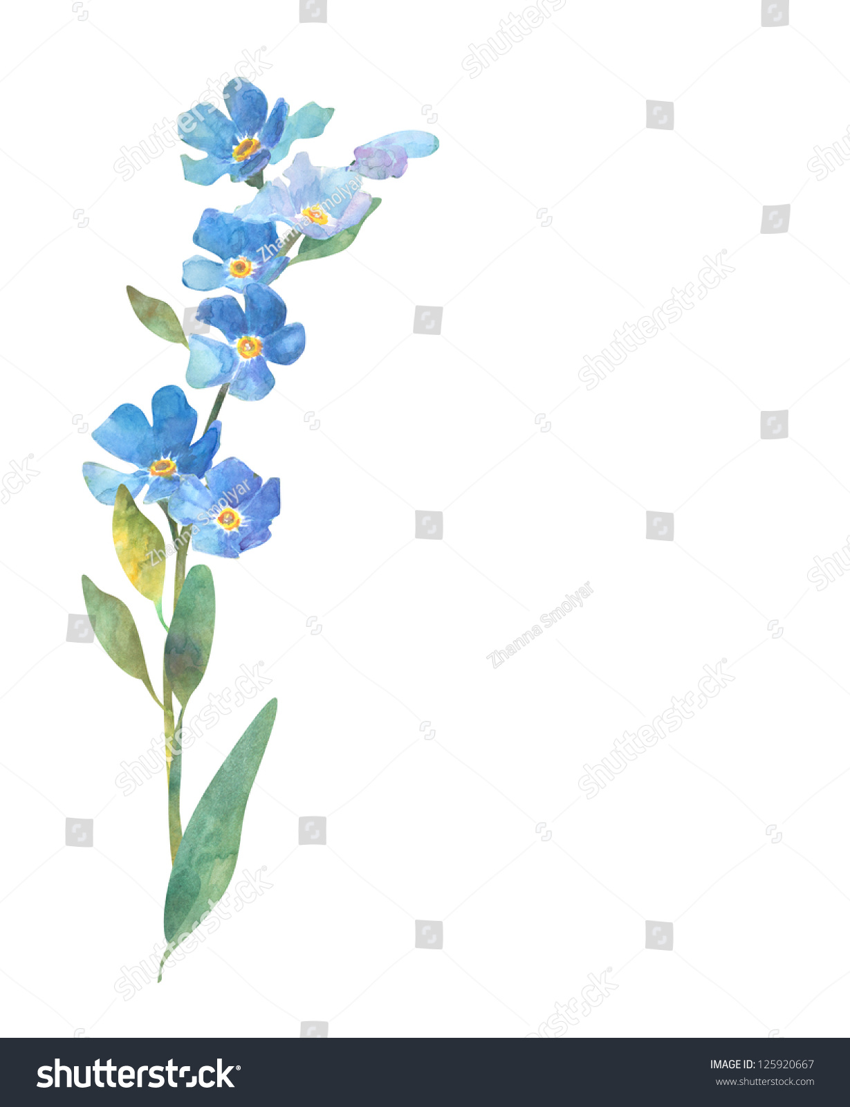 The Gallery For Gt Forget Me Nots Drawing