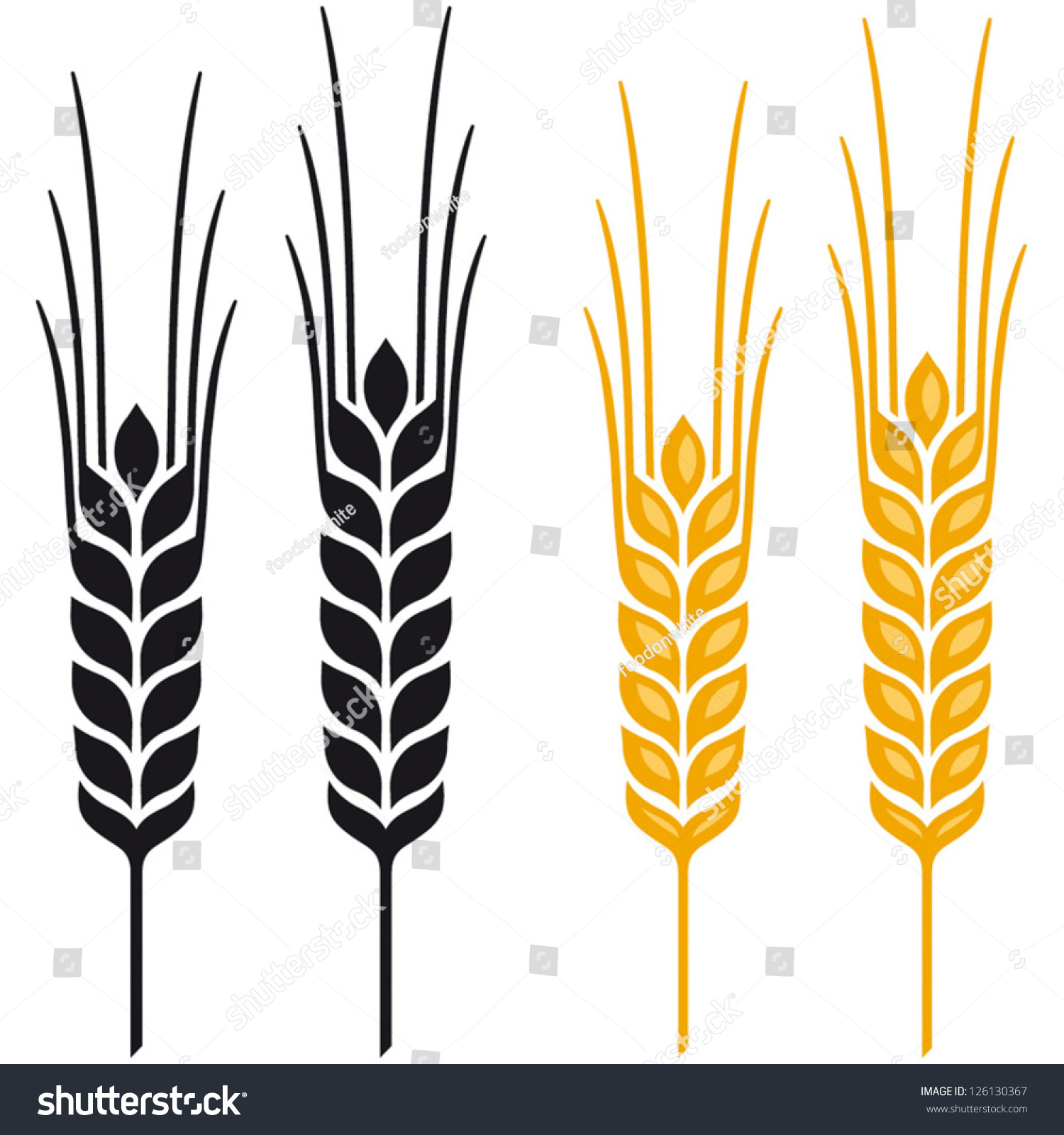 ears wheat barley rye vector visual stock vector 126130367 rh shutterstock com wheat barley vector wheat barley vector
