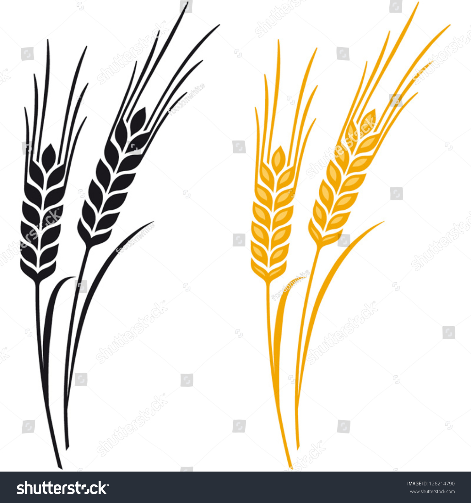 ears wheat barley rye vector visual stock vector 126214790 rh shutterstock com barley vector free download barley vector free