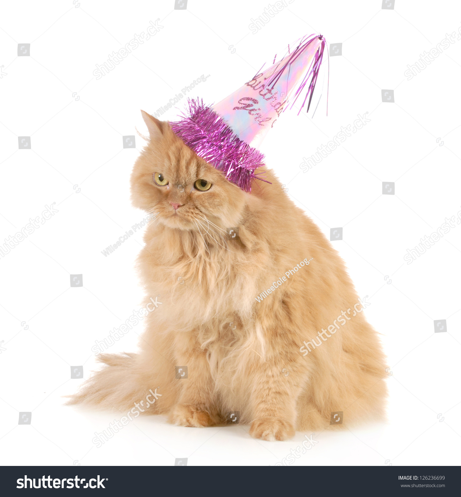 Birthday Cat Wearing Party Hat Isolated On White Background