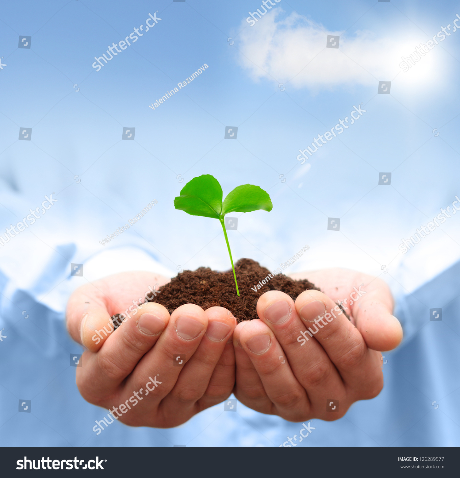 Man Hands Holding Green Plant Ecology Stock Photo 126289577 ...