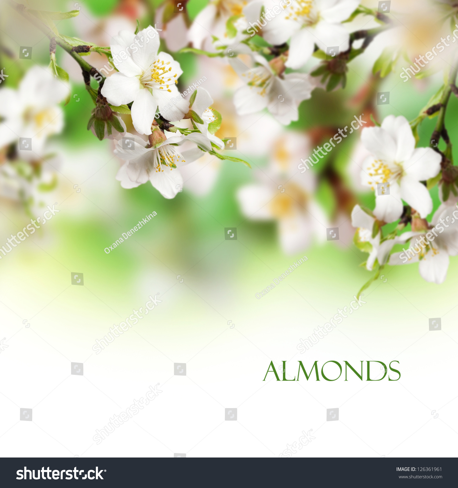 Beautiful almonds flower with white background | EZ Canvas