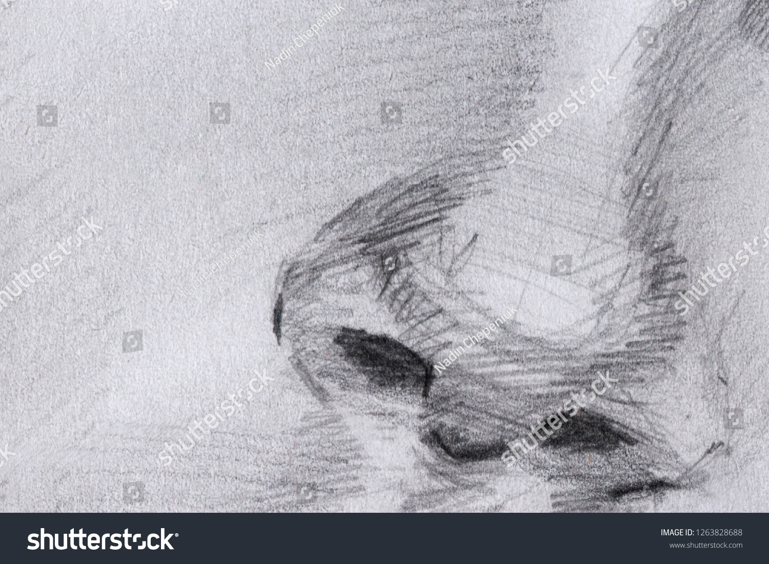 Pencil drawing nose sketch graphics
