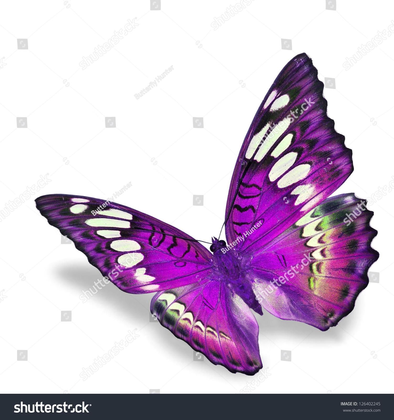 real purple butterflies flying wwwimgkidcom the