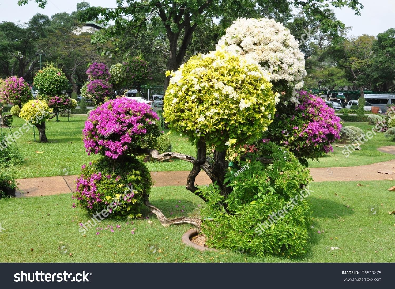 Landscape Design Round Shape Bougainvillea Trees Stock Photo ...