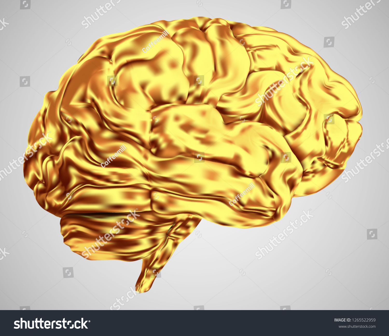 Anatomical Human Brain Mesh Vector Scientific Stock Vector Royalty