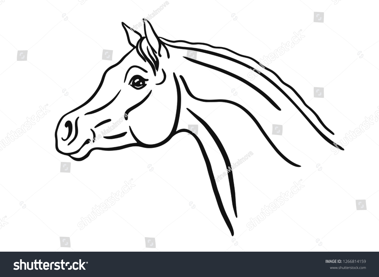 Vector De Stock Libre De Regalias Sobre Vector Sketch Arabian Horse Head1266814159