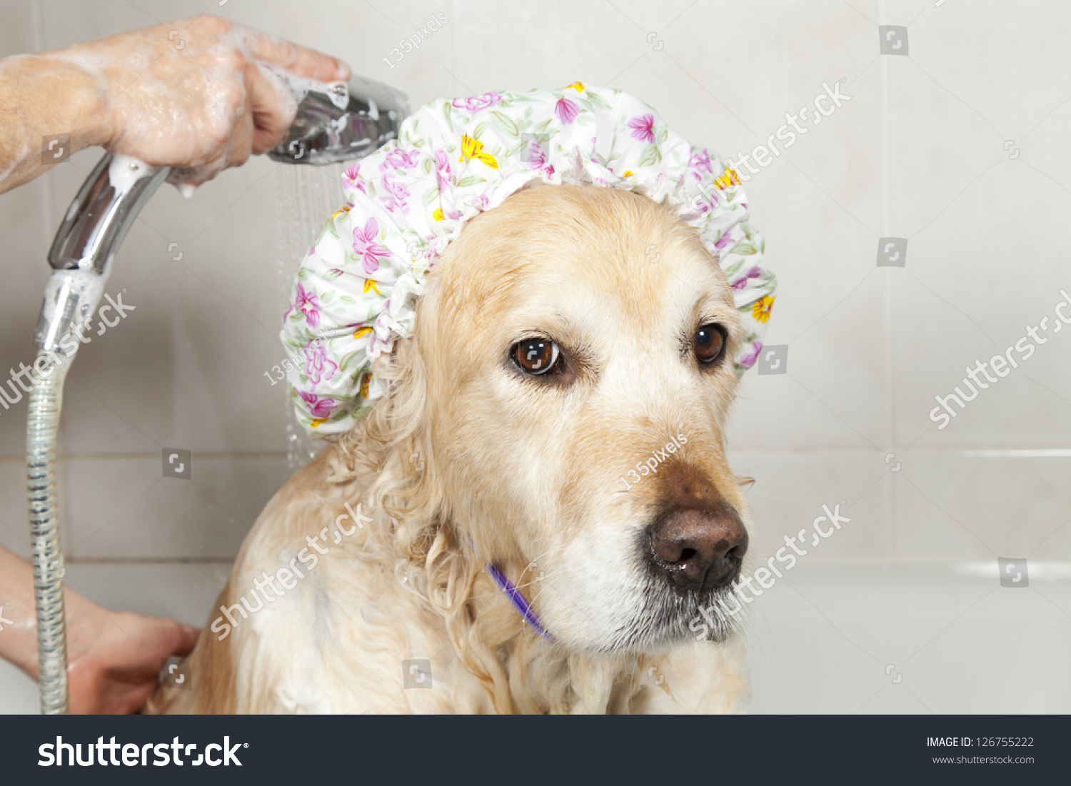 Attirant A Dog Taking A Shower With Soap And Water