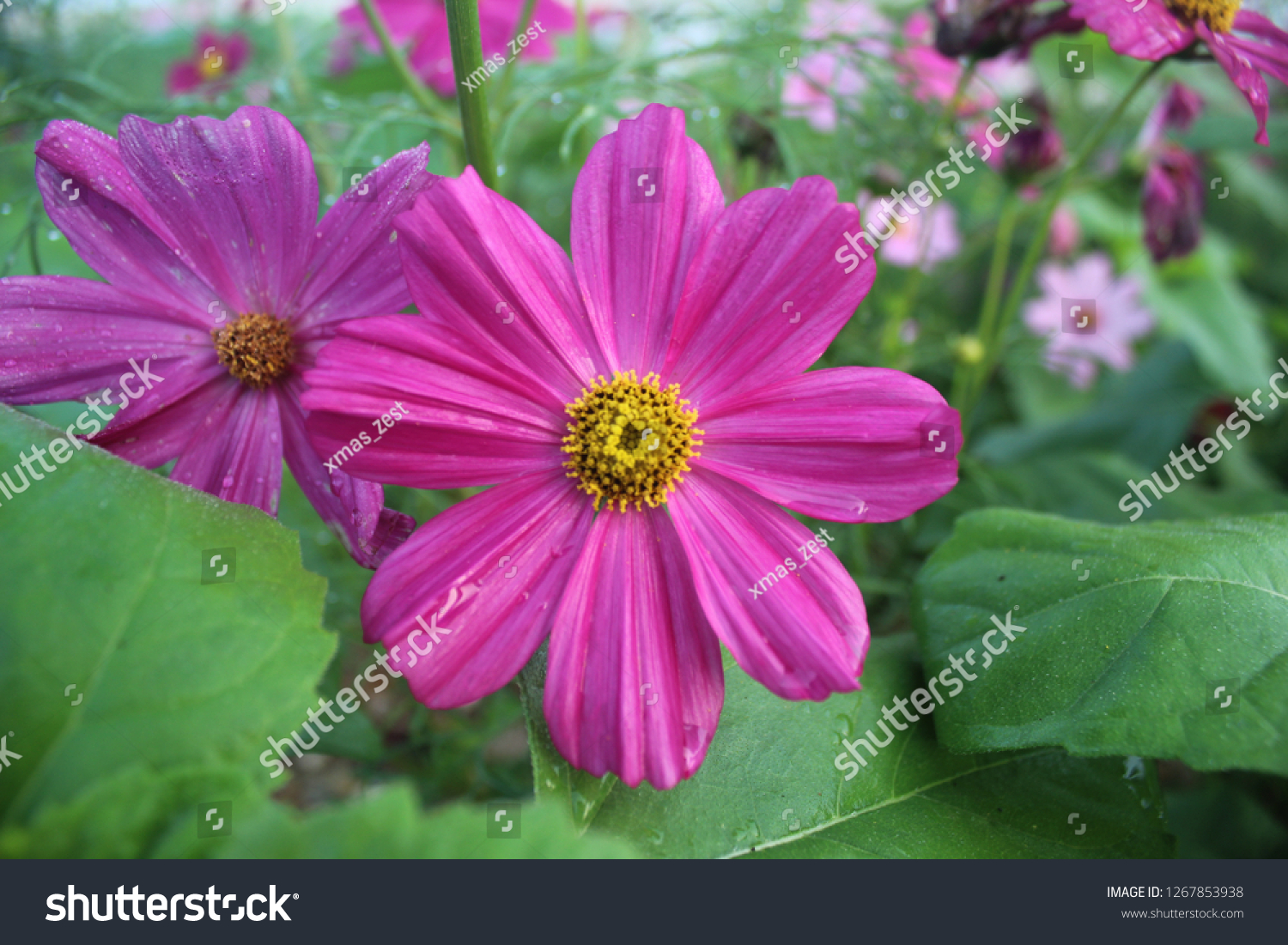 Beautiful Flowers Floral Scents Beautiful Flower Stock Photo