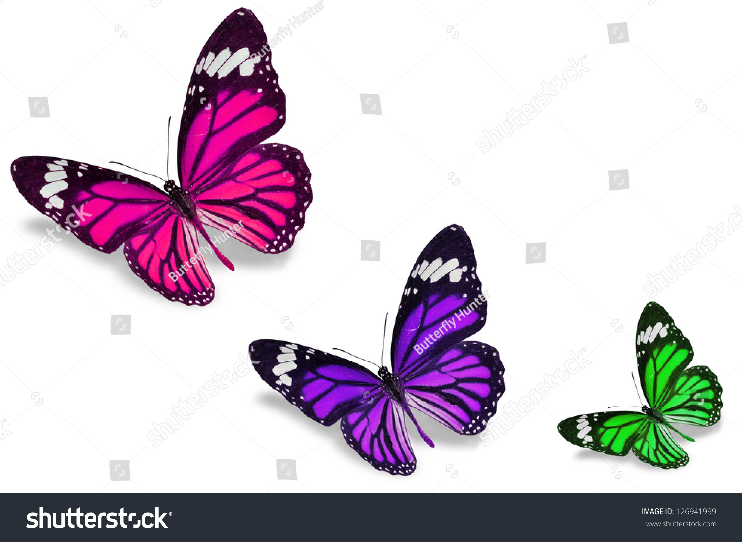 Colorful Butterflies Stock Photo 126941999 - Shutterstock