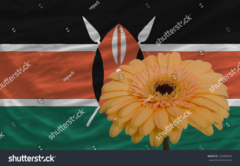 Gerbera Daisy Flower National Flag Kenya Stock Photo Edit Now