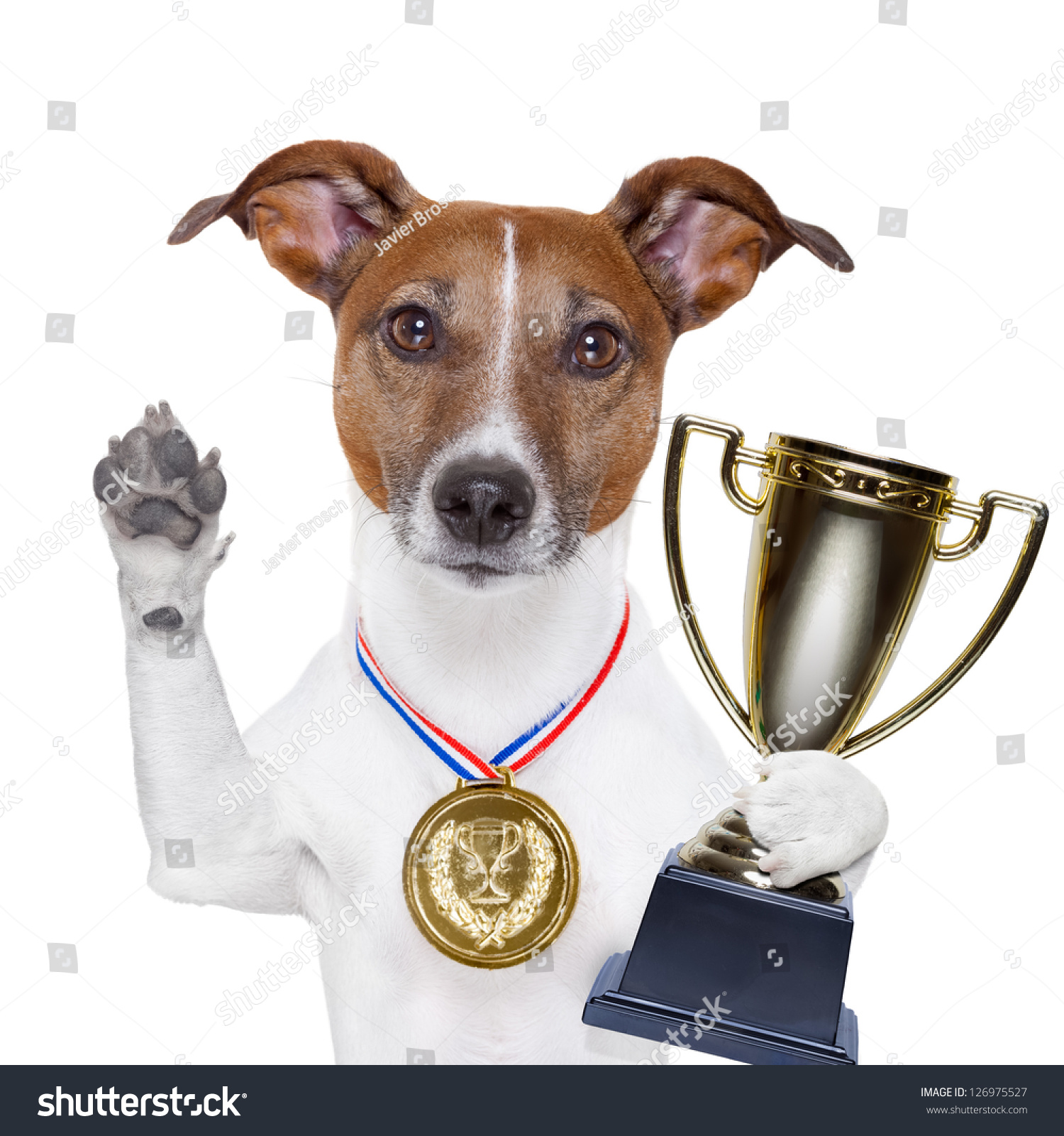 Dog Show Medals