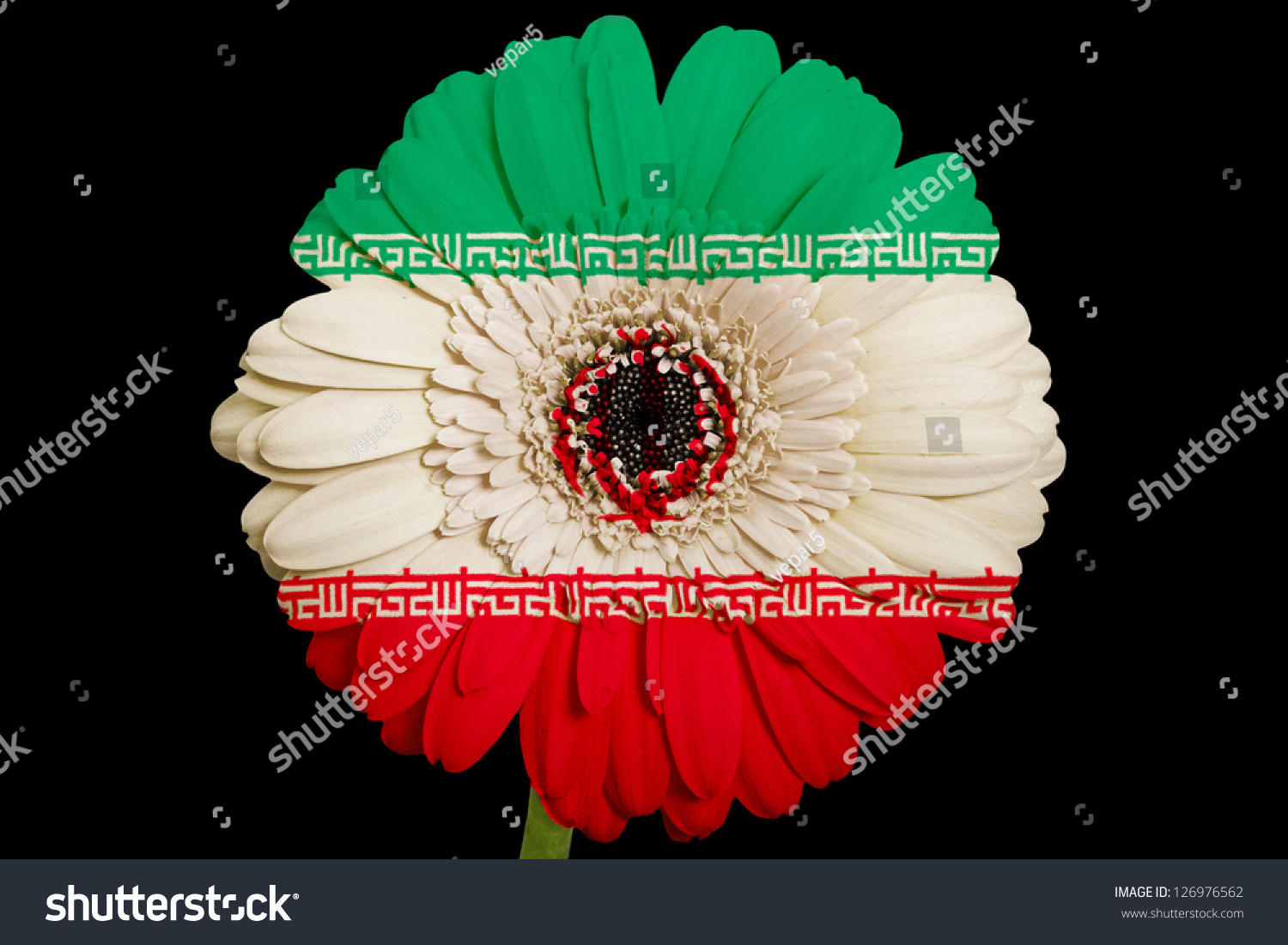 Gerbera daisy flower colors national flag stock photo 126976562 gerbera daisy flower in colors national flag of iran on black background as concept and symbol buycottarizona Choice Image