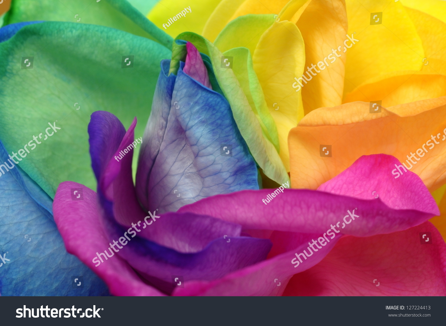 Macro of rainbow rose heart and colored petals stock photo for Rainbow petals