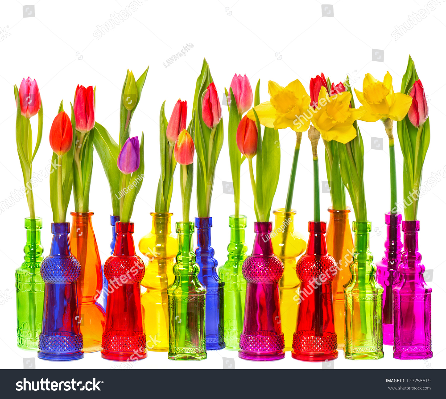 Many tulip narcissus flowers colorful glass stock photo 127258619 many tulip and narcissus flowers in colorful glass vases on white background reviewsmspy