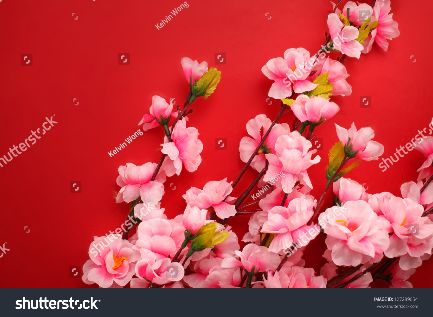 Plum flowers red packet chinese new stock photo 127289054 - Flowers for chinese new year ...
