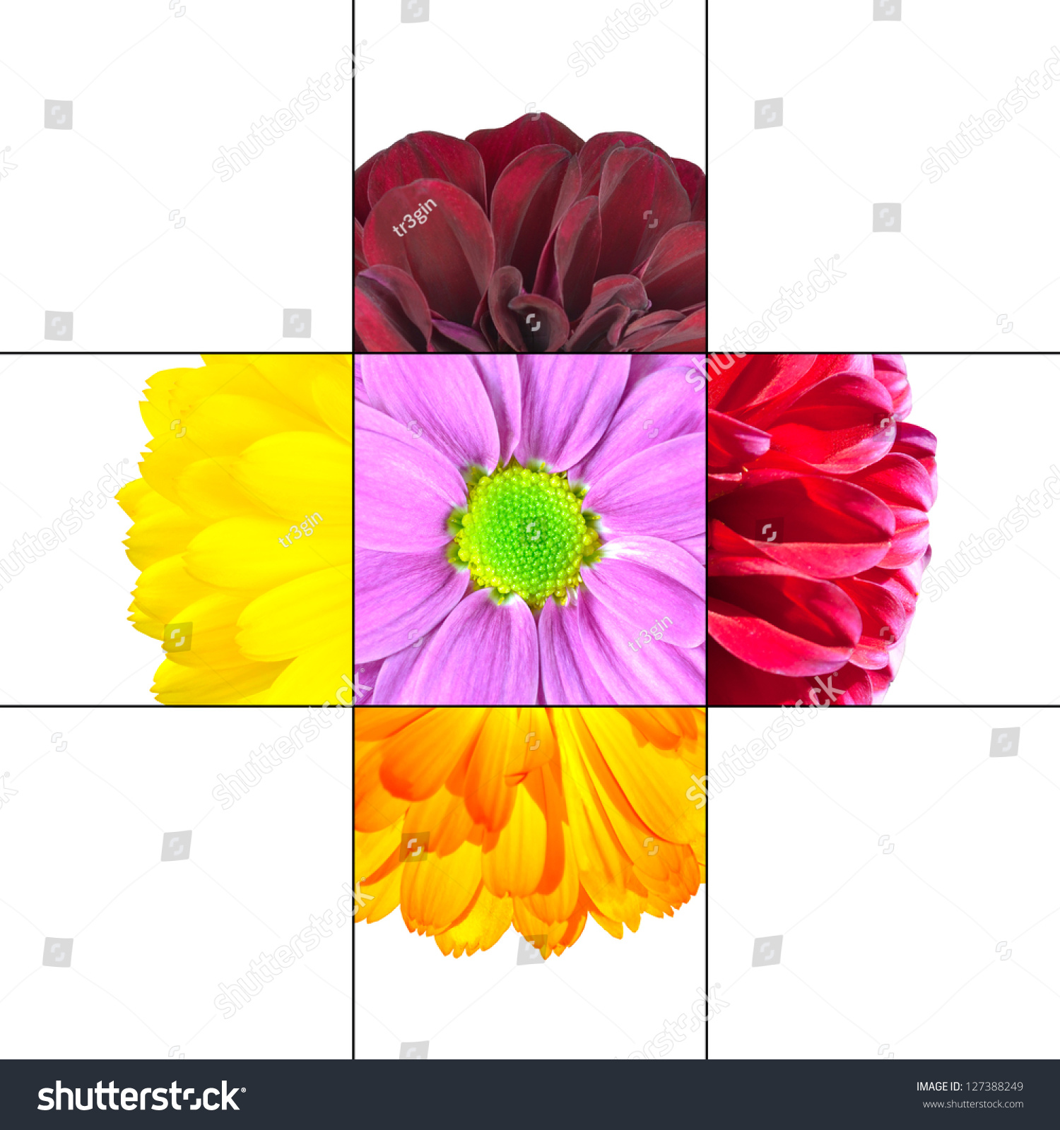 Royalty free colorful daisy flower mosaic design 127388249 stock colorful daisy flower mosaic design which is consisting of 9 squares on 3x3 grid with parts izmirmasajfo