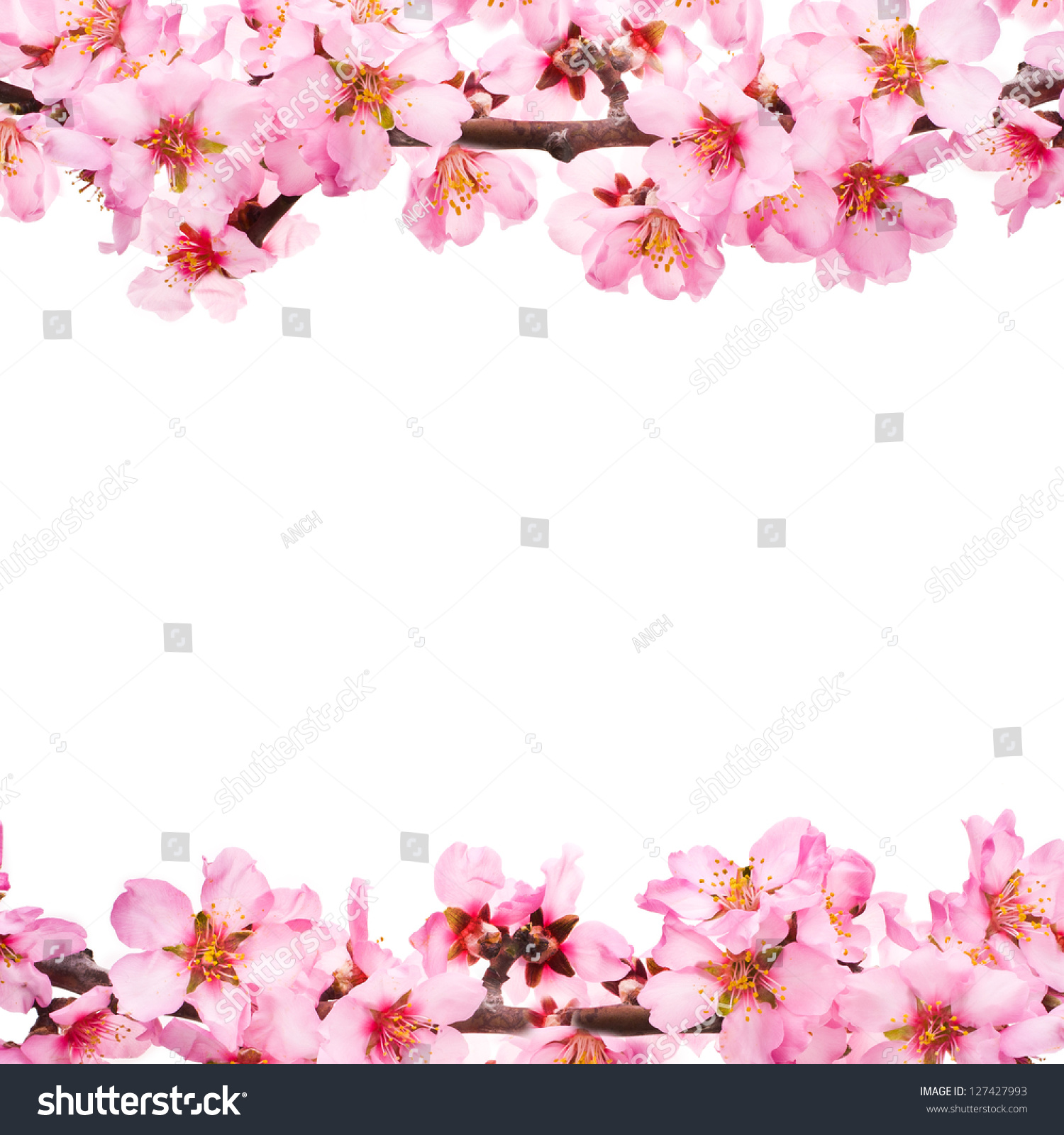 Spring Flowering Branches Pink Flowers No Stock Photo Royalty Free