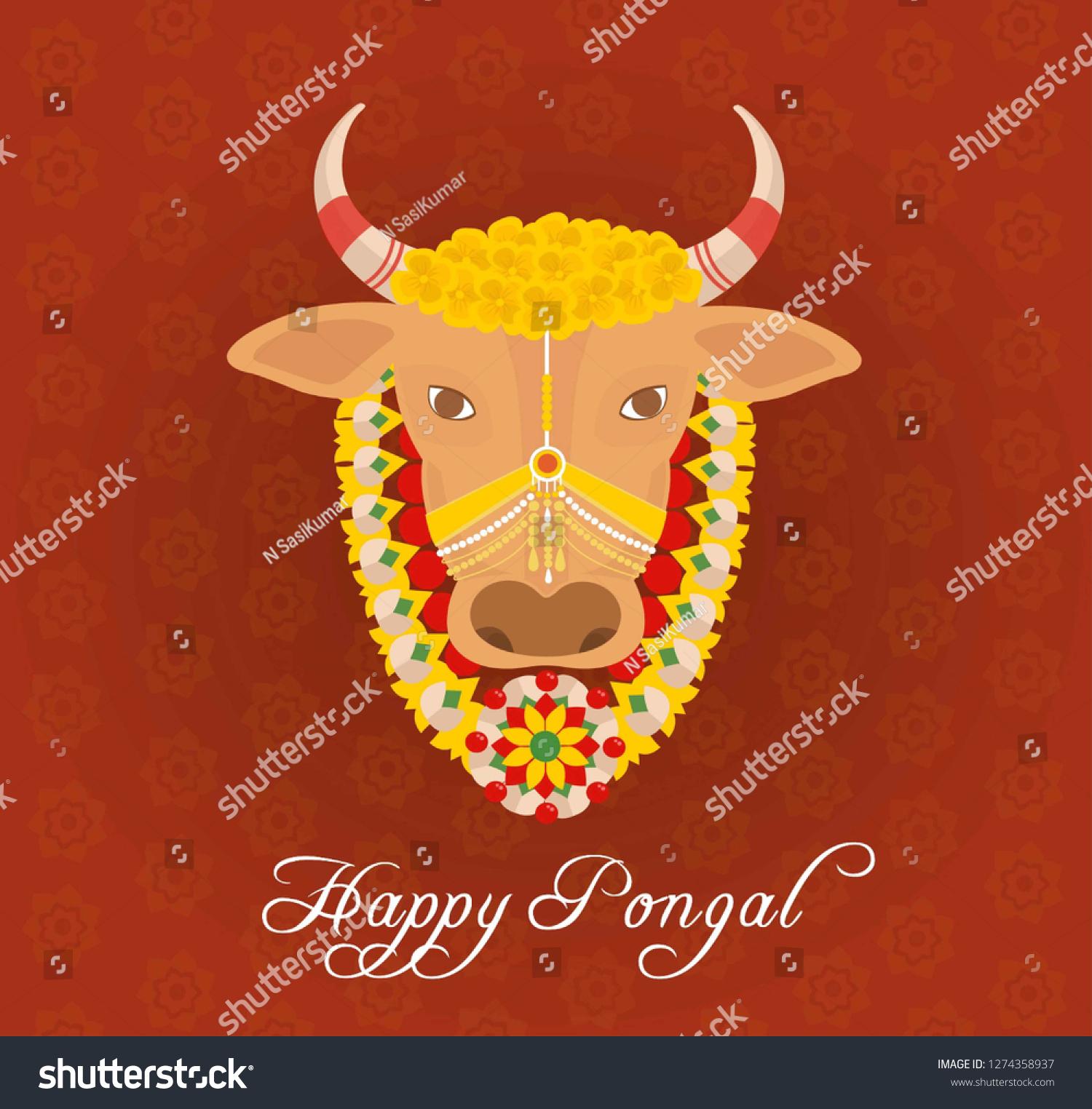 Happy pongal 2019 card with designed jallikattu cow background