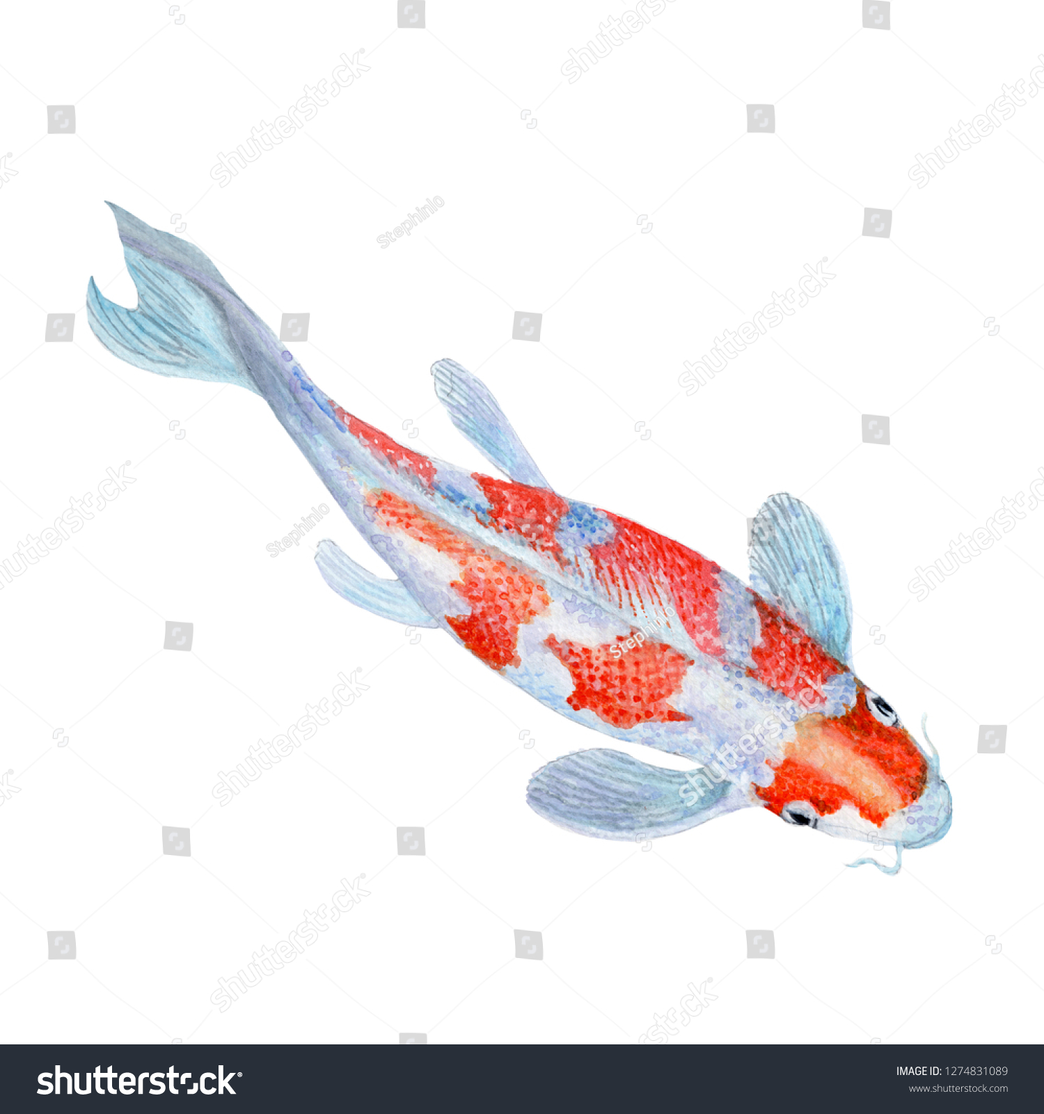 Carp Koi Fish Watercolor Painting Print Stock Illustration 1274831089