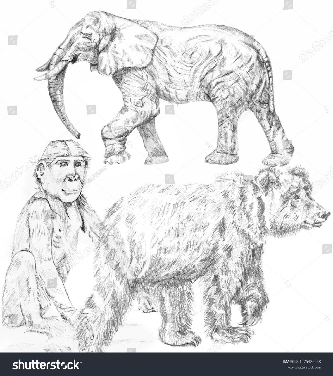 Zoo animals pencil drawings drawnancientcutefarmengravingetching