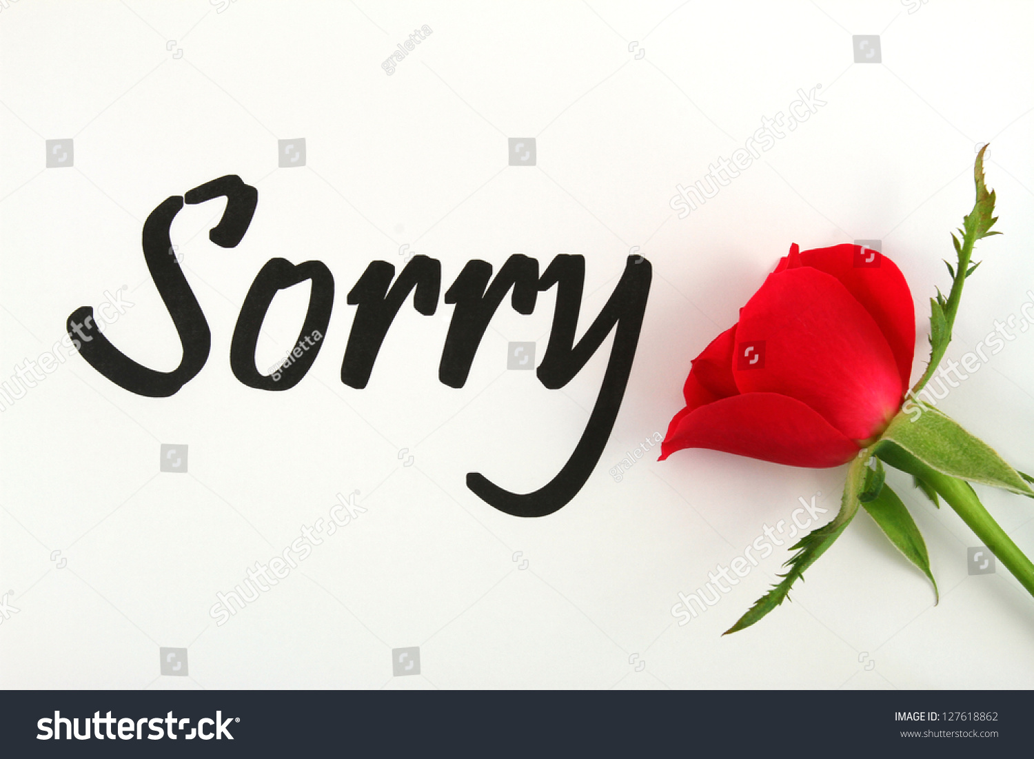 Sorry Card Red Rose Stock Photo Edit Now 127618862 Shutterstock