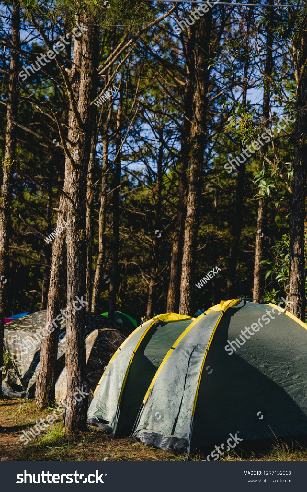 tent camping on grass near tree #1277132368