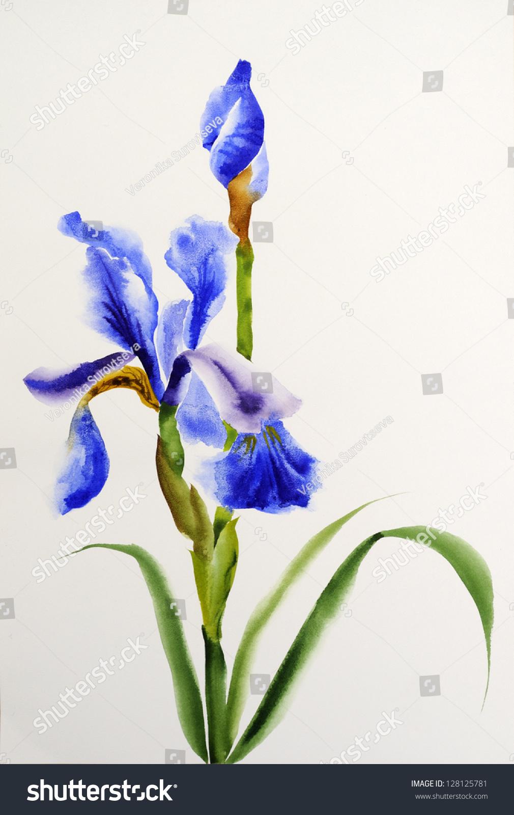 Blue iris flowers original watercolor painting stock illustration blue iris flowers original watercolor painting izmirmasajfo