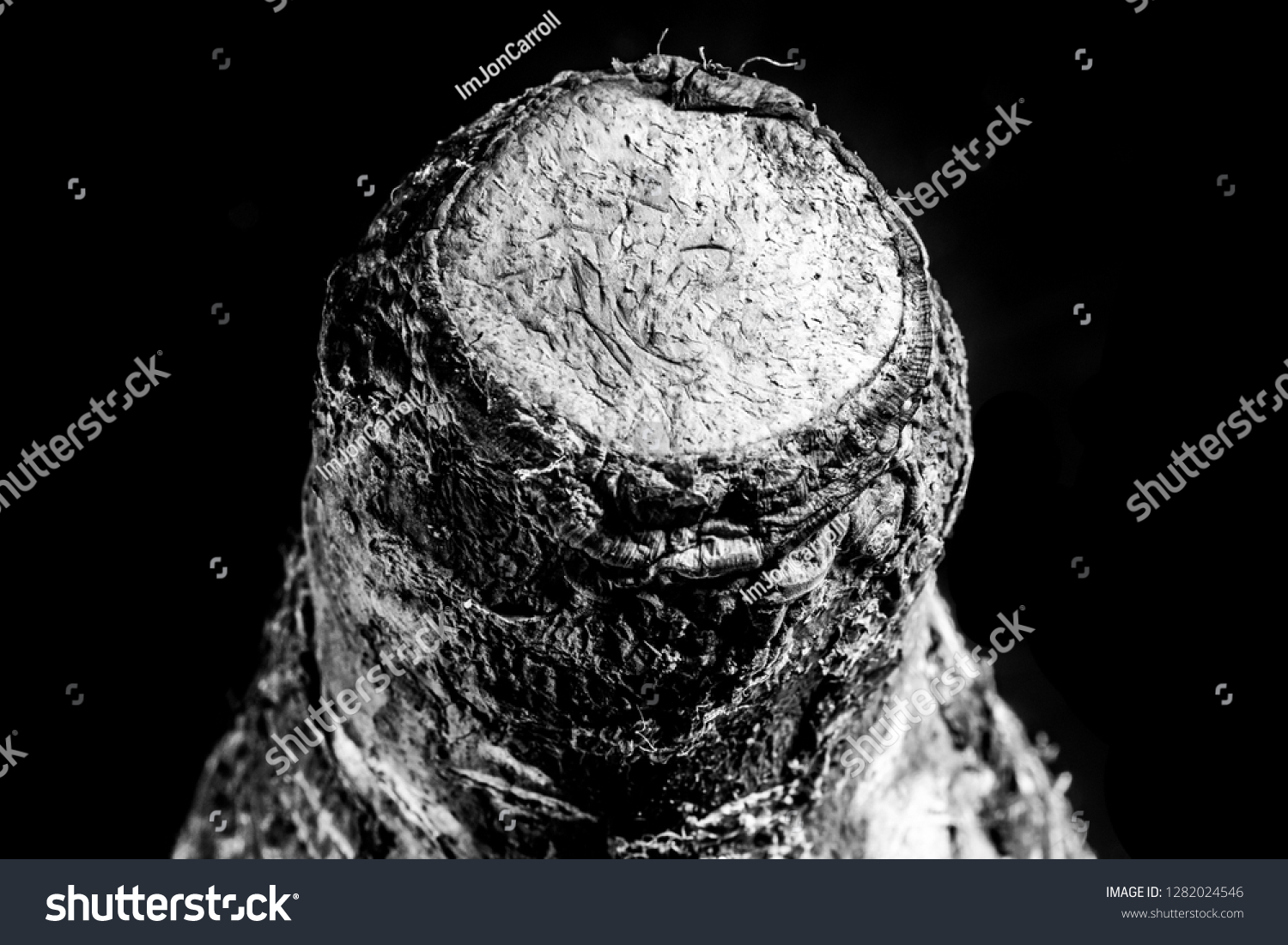 Close End Malanga Coco Root On Stock Photo Edit Now 1282024546