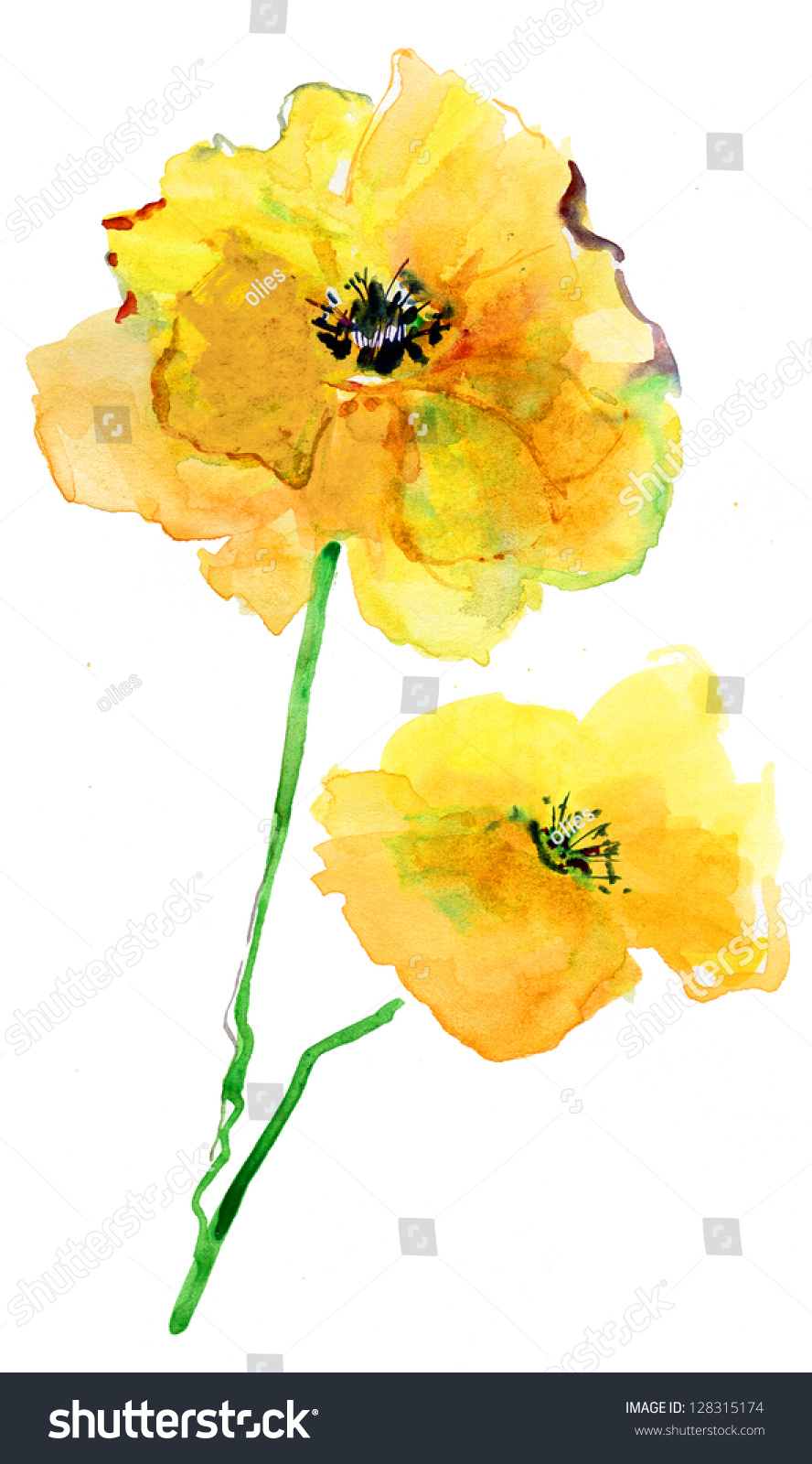 Colorful Yellow Poppy, Watercolor Illustration - 128315174 ...