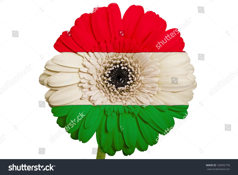 Gerbera Daisy Flower Colors National Flag Stock Photo Edit Now