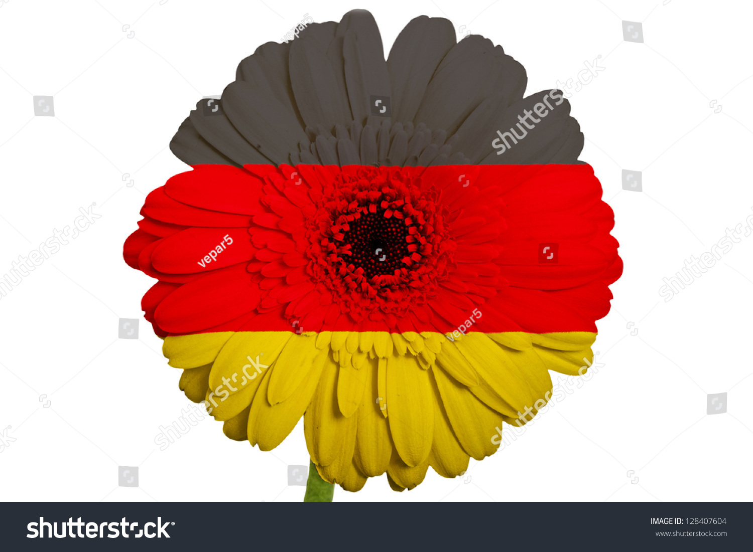 Gerbera Daisy Flower Colors National Flag Stock Photo Royalty Free