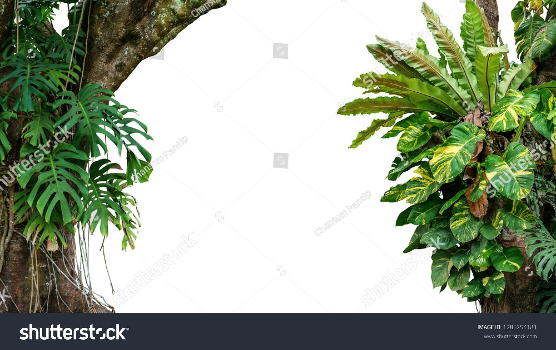Portfólio de Chansom Pantip no Shutterstock