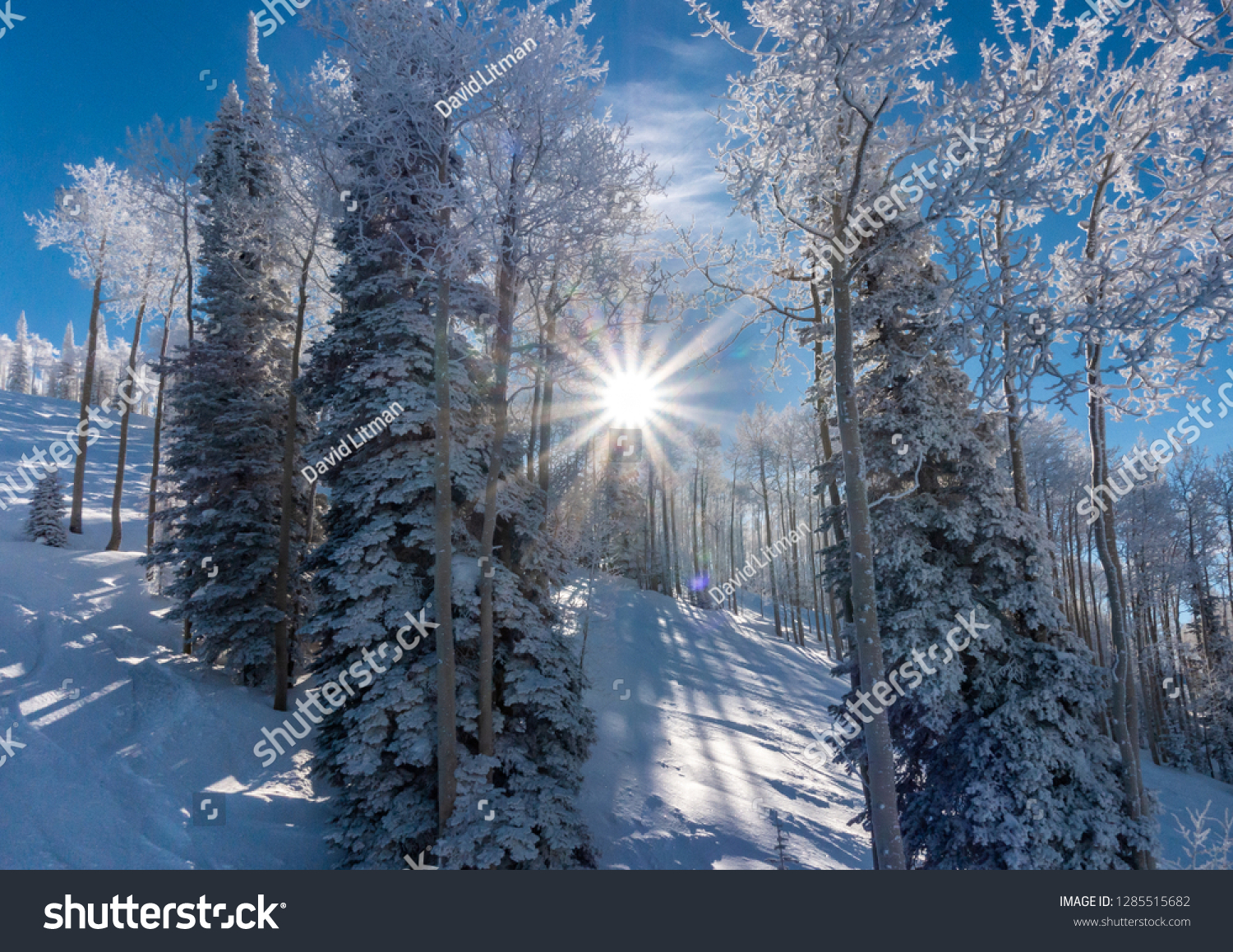 Sunrise in the Rocky Mountains of Colorado, as the sun rises and shines through snow covered pine trees and Aspen trees.