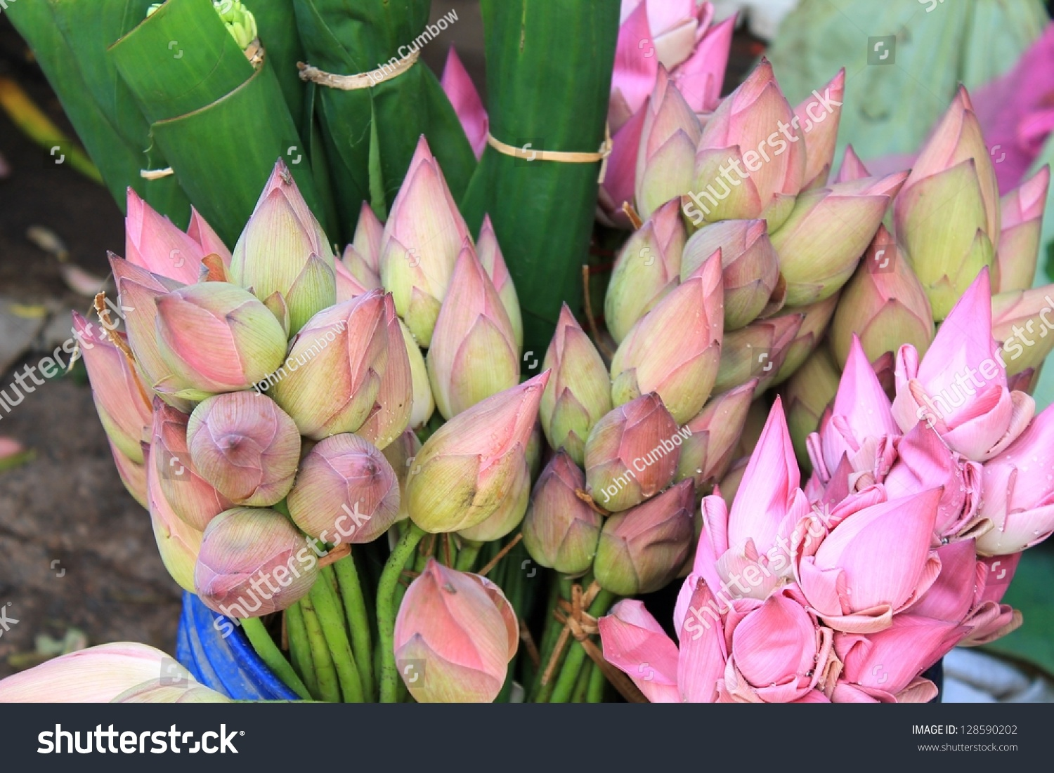 Bunches freshly cut lotus flowers sale stock photo edit now bunches of freshly cut lotus flowers for sale at the farmers market in battambang cambodia izmirmasajfo