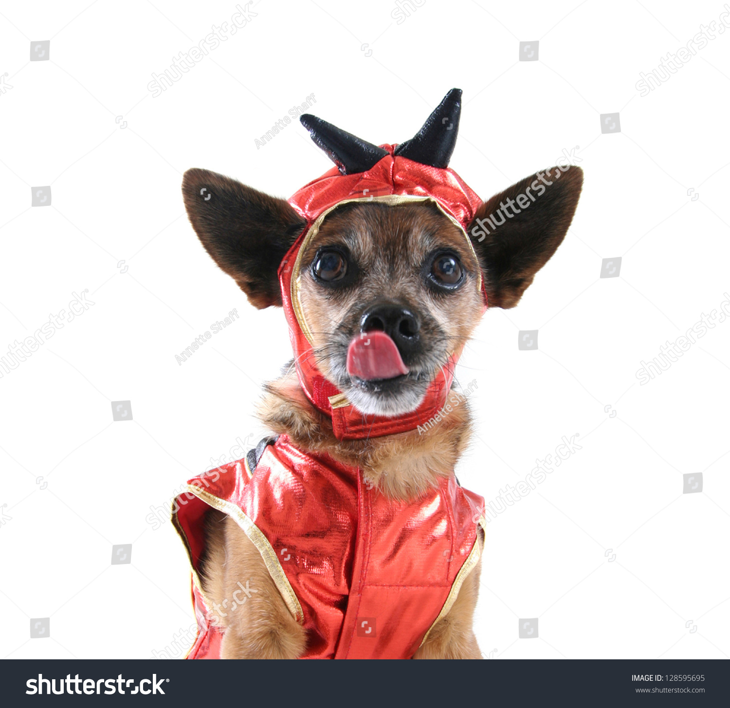 Cute Dog Dressed Stock Photo Edit Now 128595695 Shutterstock