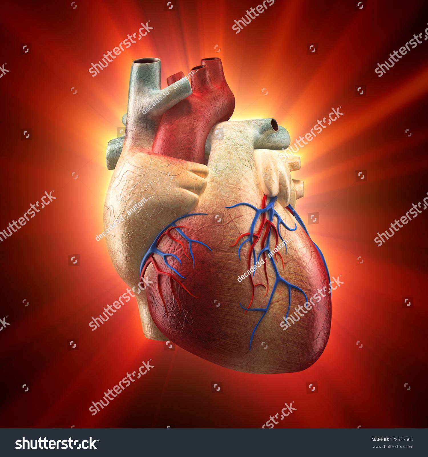 Royalty Free Stock Illustration Of Real Heart Shinning Light Human